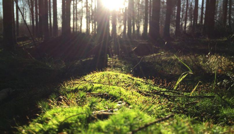 Hälsosamma hälsningar från skogen