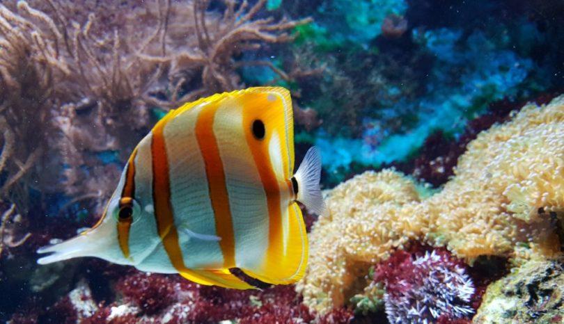 Njut av ett vackert akvarium